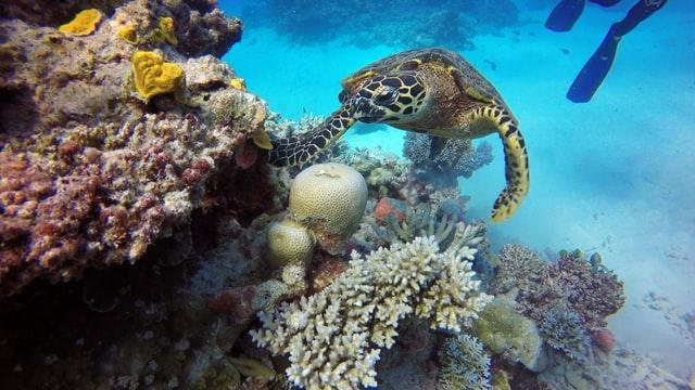 Great Barrier Reef Unsplash