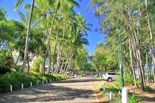 パームコーブ 椰子の木大通り